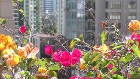 Яркие красные розовые цветки в движении ветра акции видеоматериалы