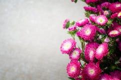 Яркие красные цветки Стоковая Фотография RF