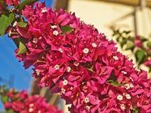 Яркие красные цветки Стоковые Изображения