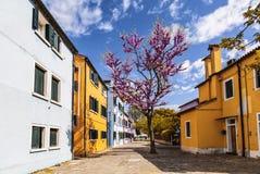 Яркие красочные дома на острове Burano на краю венецианской лагуны Венеция Стоковые Изображения