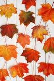 Яркие листья осени на деревянной предпосылке Стоковое фото RF