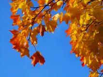 Яркие листья осени против голубого неба Стоковое фото RF