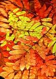яркие листья Стоковая Фотография