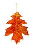 яркие листья Стоковые Изображения RF