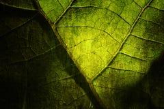 яркие листья grunge Стоковые Изображения RF