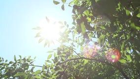 Яркие лучи и листва солнца видеоматериал