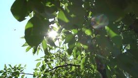 Яркие лучи и листва солнца акции видеоматериалы