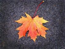 Яркие оранжевые лист упали на серый асфальт Стоковые Фотографии RF