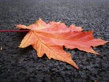 Яркие оранжевые лист упали на серый асфальт Стоковые Изображения RF