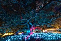 Яркие освещение фестиваля Сиднея 2016 светлое дерева евкалипта Стоковое Изображение RF