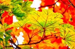 Яркие осенние красные цветы и золота стоковое изображение rf