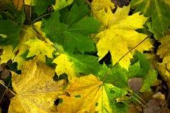 Яркие покрашенные упаденные листья лежа на дороге в парке Стоковые Изображения