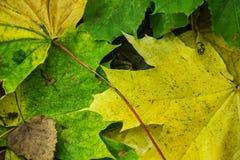 Яркие покрашенные упаденные листья лежа на дороге в парке Стоковое Изображение RF
