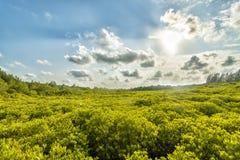 Яркие поля золота Стоковые Фотографии RF