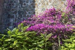 Яркие розовые fuchsia цветки стоковые фотографии rf
