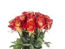 Яркие розы на белой предпосылке Стоковая Фотография