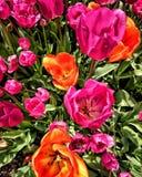 Яркие симпатичные цветки Стоковые Изображения RF