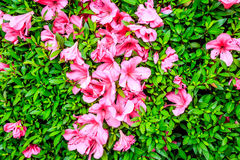 Яркие сияющие цветки Стоковые Изображения