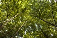 Яркие среднеземноморские treetops стоковое изображение