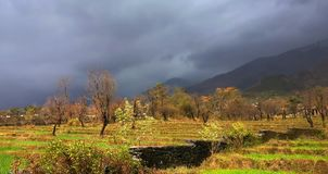 Яркие сценарные цвета сельского хозяйства террасы в удаленных индийских гималайских горах Стоковое Фото
