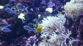 Яркие тропические заплывы рыб в чисто воде видеоматериал