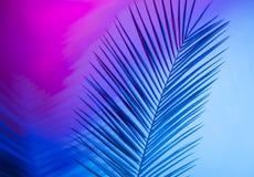 Яркие тропические листья рая, листья ладони в неоновом свете стоковая фотография