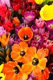 яркие тюльпаны Стоковое Изображение