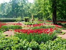 Яркие тюльпаны растут в парке 1 стоковое изображение