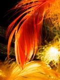 яркие цветастые пер Стоковые Фото
