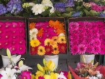 яркие цветастые цветки Стоковая Фотография