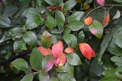 Яркие цвета осени, стоковые изображения