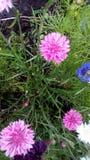 Яркие цветки в луге стоковые фото