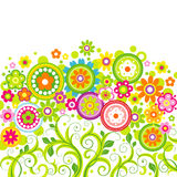 Цветки на белой предпосылке Стоковая Фотография