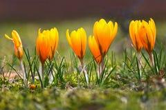 яркие цветки стоковые фотографии rf