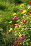 Яркие цветы краски стоковые фотографии rf