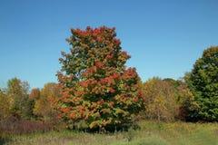 Яркие цветы падения стоковое фото rf