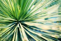 Яркие ые-зелен листья пальмы или орнаментальным запачканного комнатным растением макроса крупного плана предпосылки стоковые фотографии rf