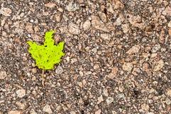 Яркие ые-зелен лист на сером асфальте на левой стороне Стоковое Изображение RF