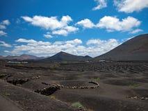 Яркие ые-зелен виноградники и bodegas на черных наклонах вулканических гор Холмы на предпосылке белизны темносинего неба заволаки Стоковое фото RF