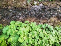 Яркие ые-зелен листья и пропуская поток, естественная сцена Стоковые Фото