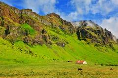 Яркие ые-зелен поля фермы Стоковая Фотография
