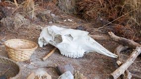 Яркий белый череп коровы Стоковое Изображение