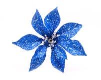 яркий блеск цветка Стоковые Фото
