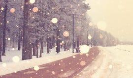 Яркий восход солнца зимы в предпосылке парка Стоковое Изображение