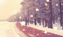 Яркий восход солнца зимы в предпосылке парка Стоковая Фотография