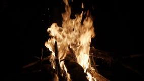 Яркий горящий огонь в лесе сток-видео