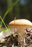 Яркий гриб стоковые фото