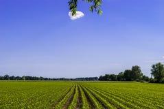 яркий день солнечный Стоковое Изображение