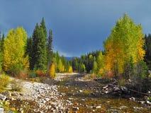 Яркий лес падения осени в после полудня около реки Стоковые Фотографии RF
