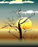 Яркий желтый комплект восхода солнца и захода солнца Стоковое Изображение RF